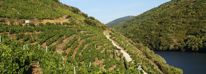 Ribeira Sacra viñedos